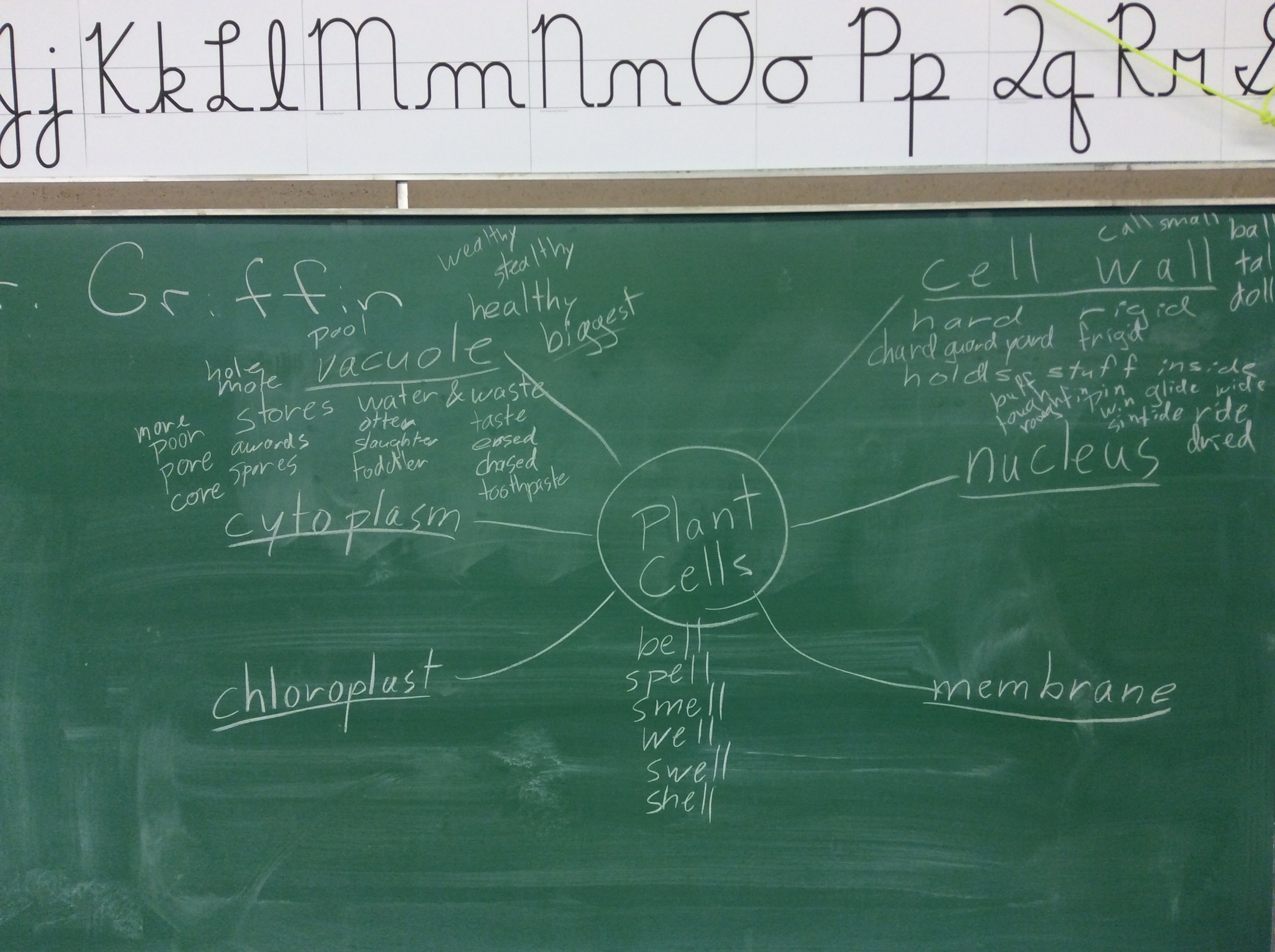 Brainstorming for a song about plant cells.